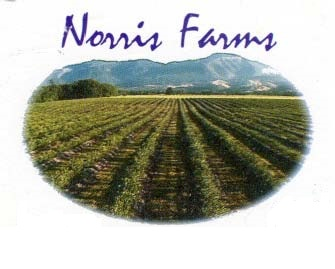 NorrisFarms Blueberries
